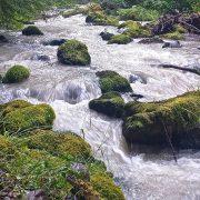 Washington State's Green Bond Sale Shows Investors Value Conservation